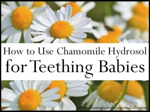 German Chamomile Hydrosol for Teething