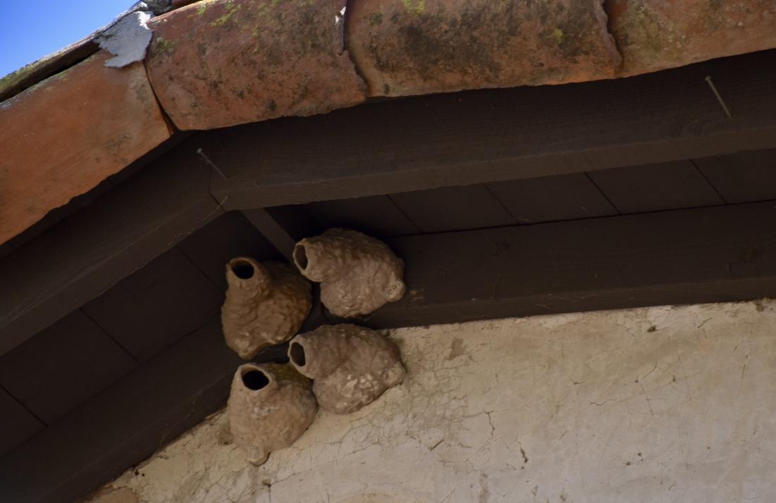 Plaster Nests