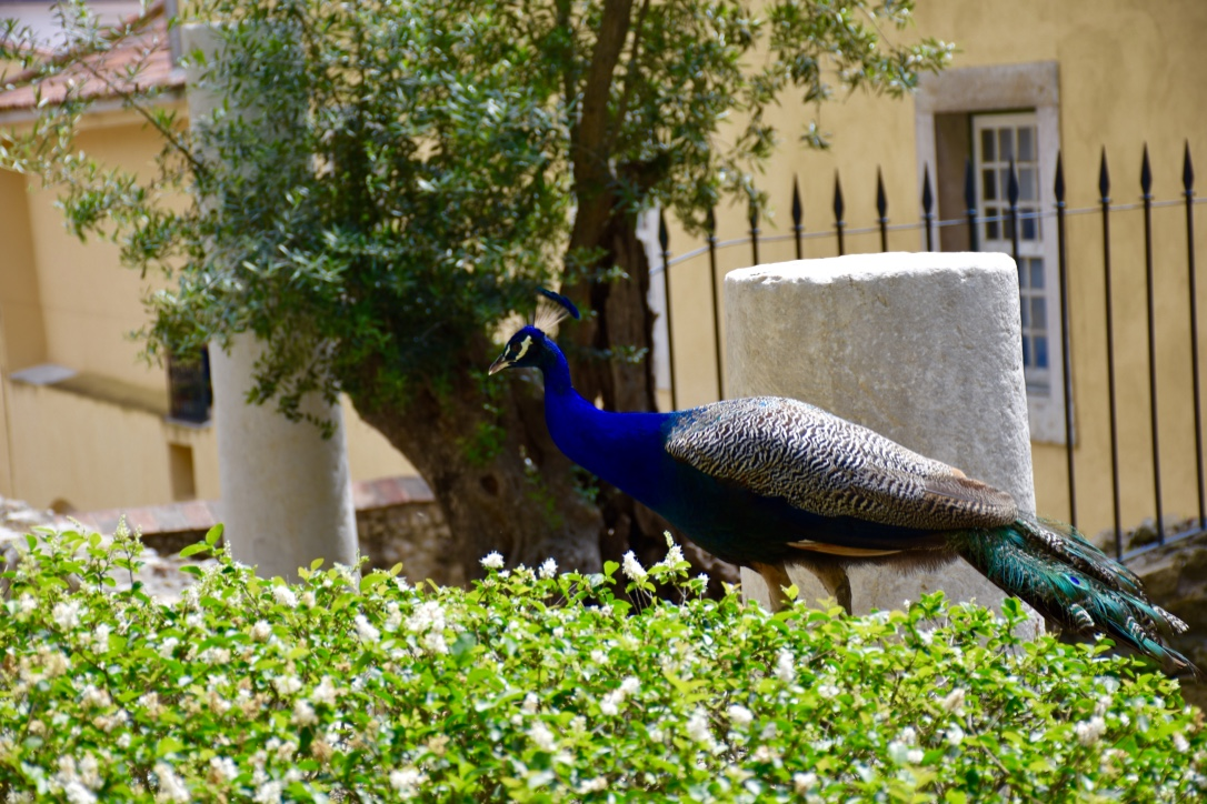 Castle Peacock 2