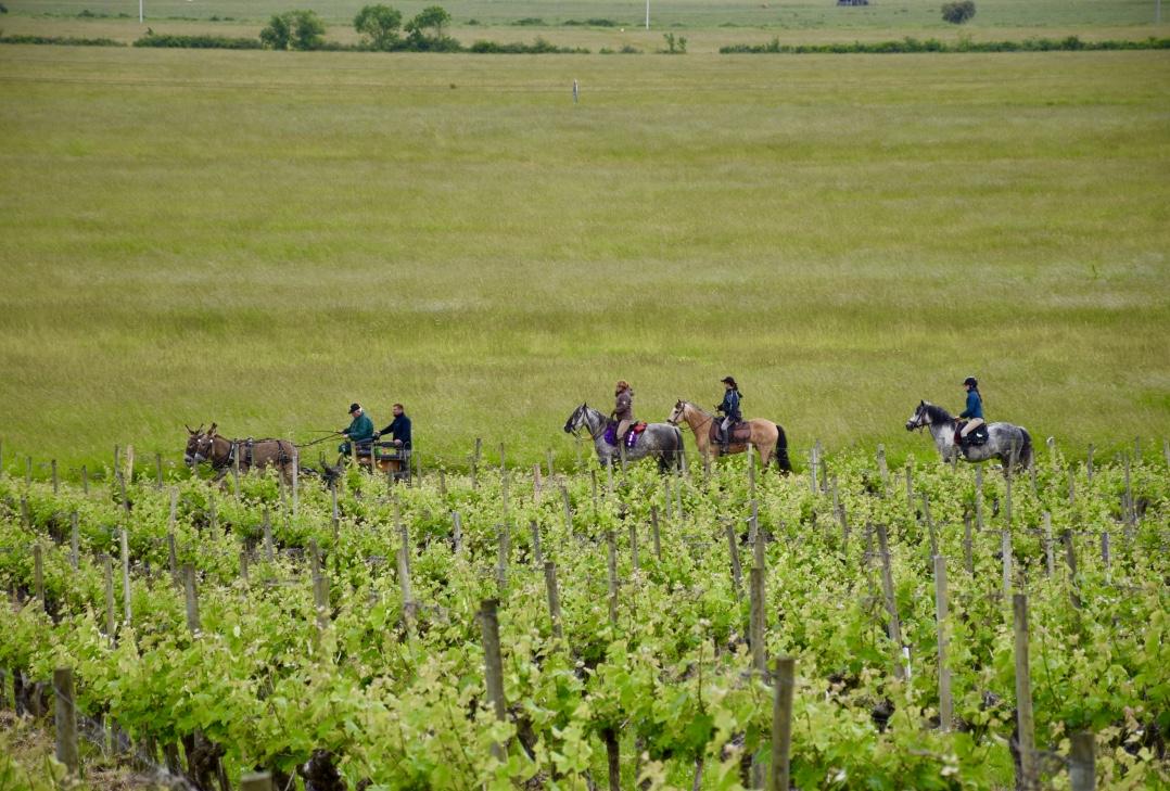 chateau-loudenne-horses