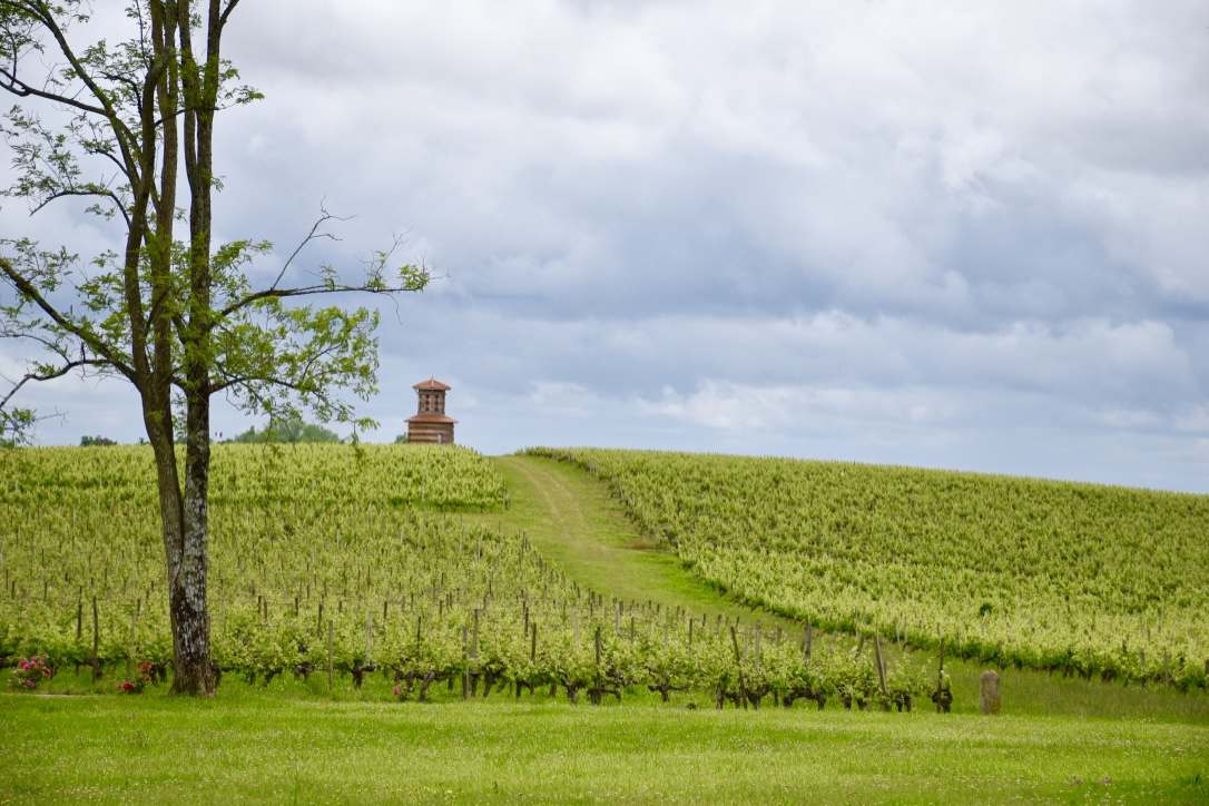 chateau-loudenne-vineyards