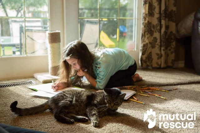 For those with autism, a bond with animals can be life-changing (even cats).  Mutual Rescue Presents Jade & Trubs #autismparenting #autism #specialneedsparenting #asd @MutualRescue