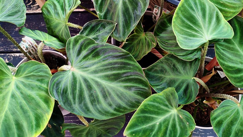 Nieuwe planten kopen