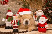 Nettoyage pour les fêtes de Noël
