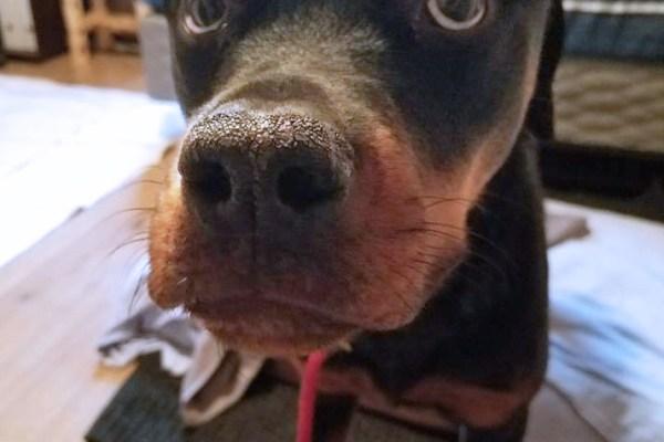 Pablo on adoption day