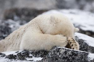 bear-hiding-eyes