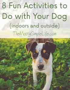 8 Fun Activities to Do with Your Dog