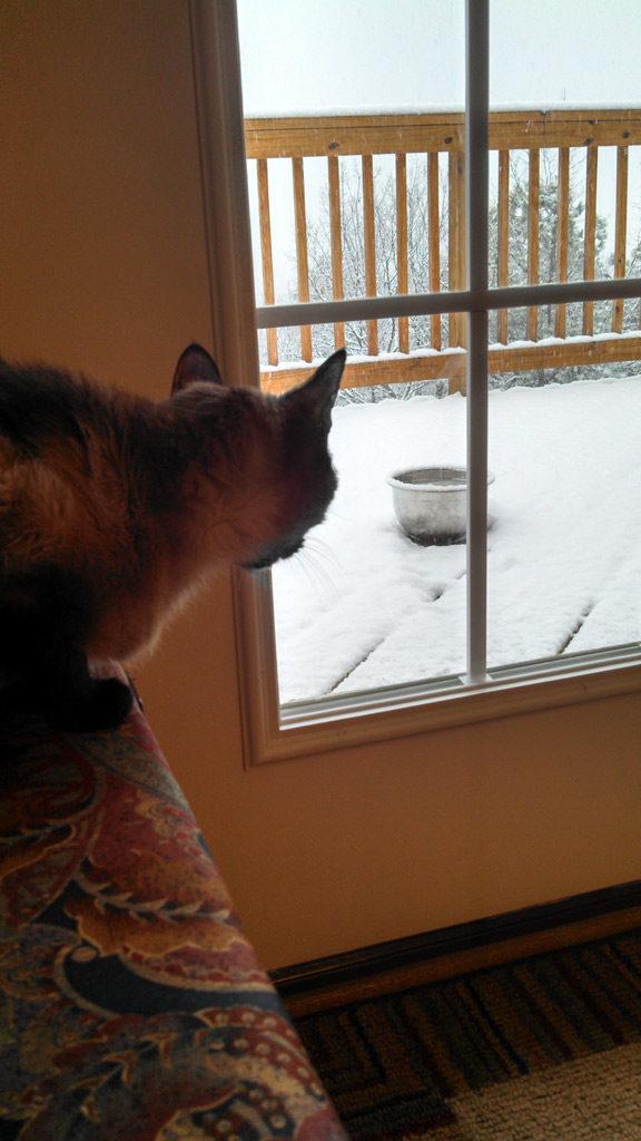 His Royal Highness looking at snow