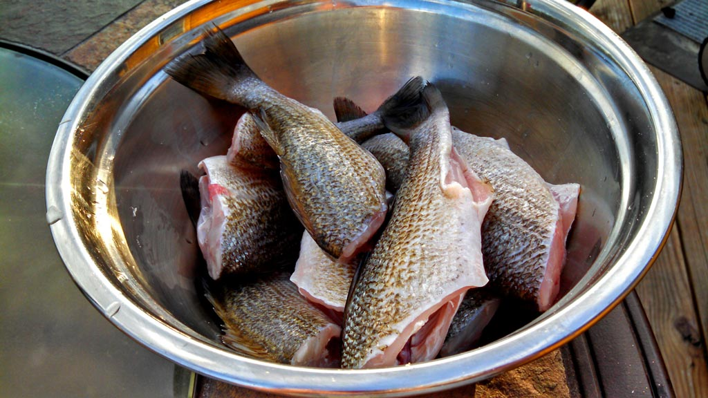 Fried White Perch ~ Fresh caught White perch battered in yellow cornmeal, salt and pepper then deep fried until crispy golden brown. Taught by River Folks! | TheMountainKitchen.com