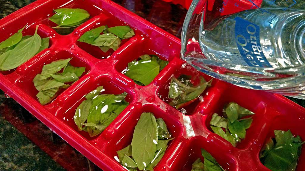 Basil is a very tender herb and once picked, basil wilts at an alarming rate. Learn 4 ways to preserve basil to enjoy for the winter months.   TheMountainKitchen.com