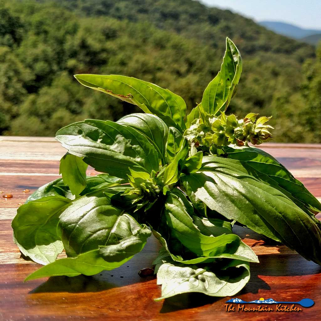 basil with mountain view