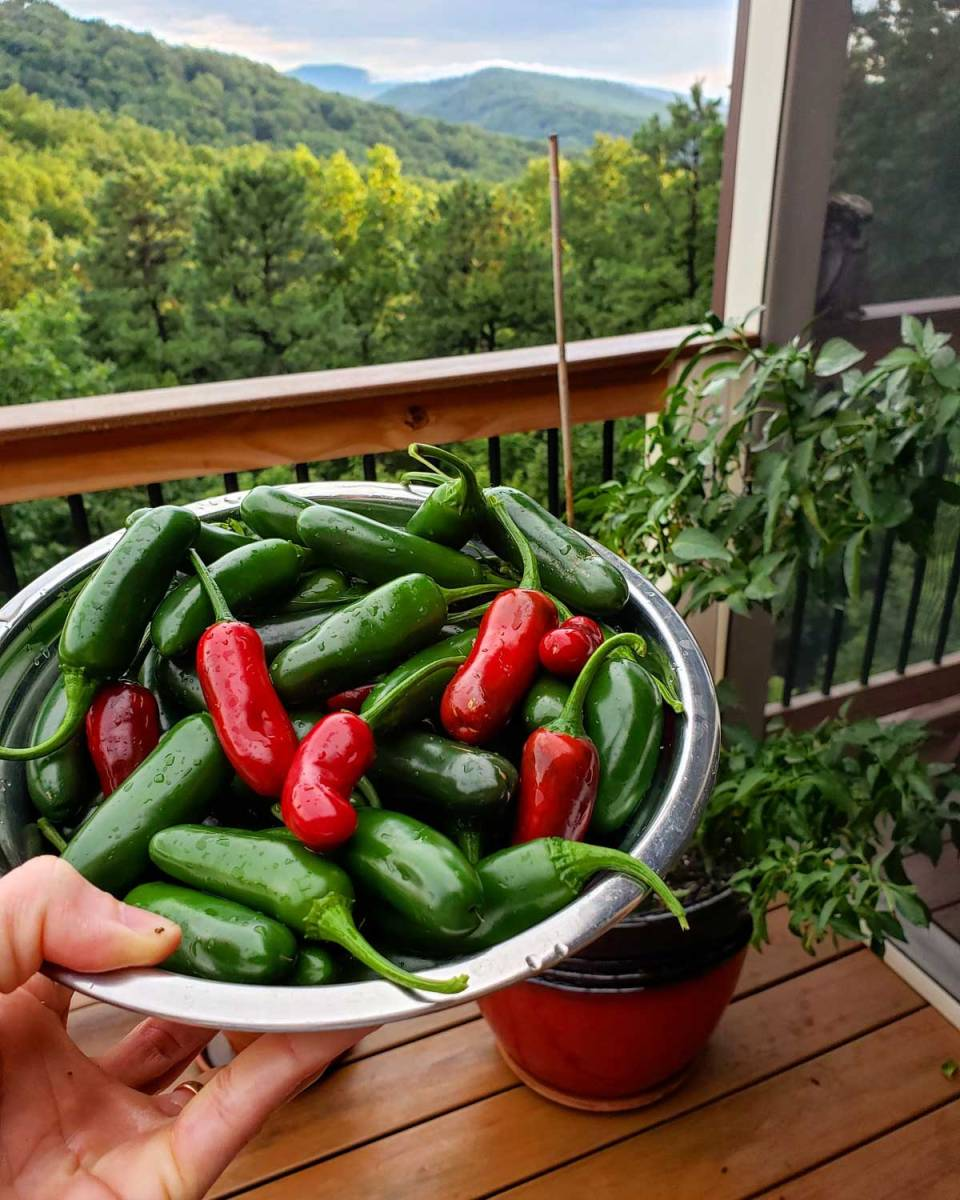 Jose's jalapeno peppers with mountain view