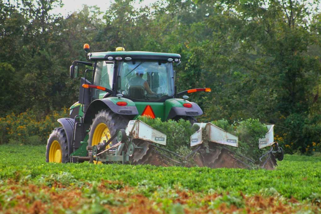 a farmer in a tractor digging peanuts