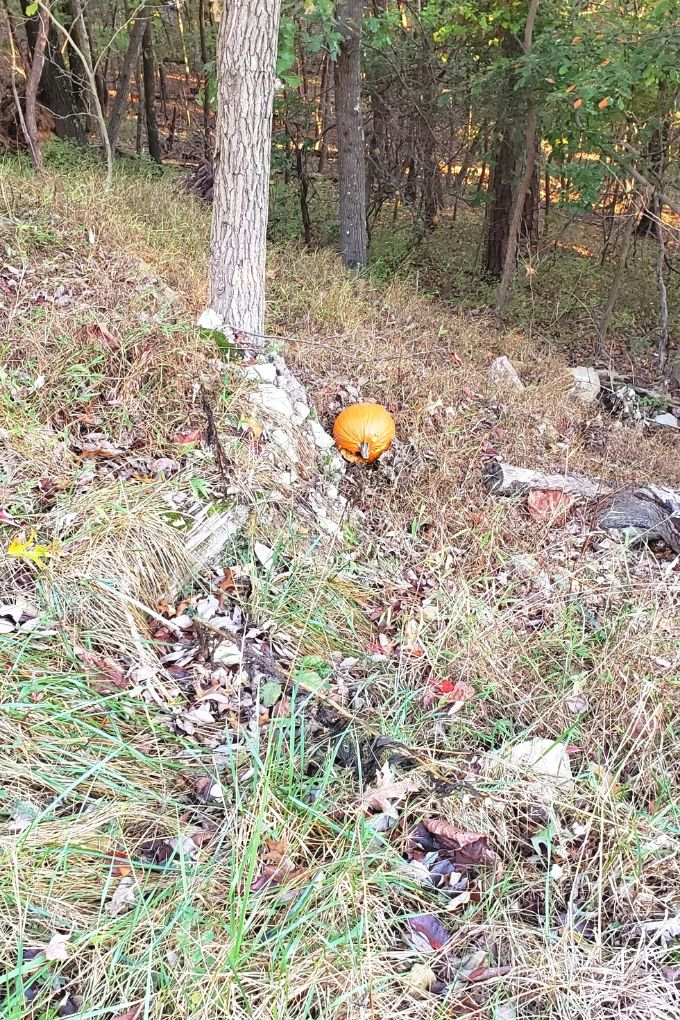 pumpkin in woods down the hill