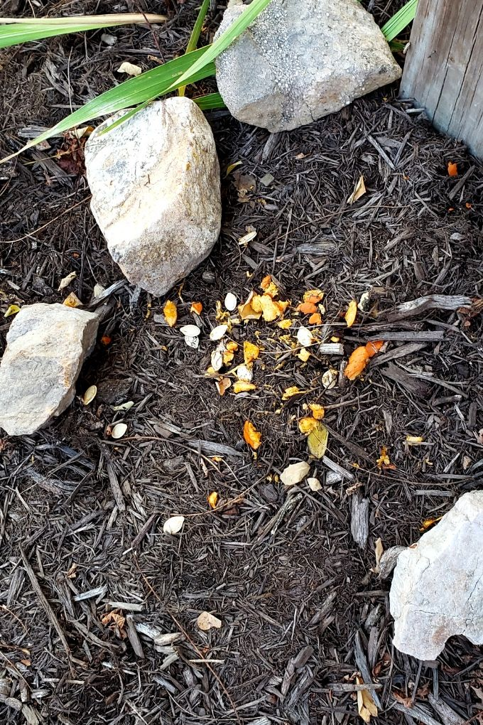 pumpkin bits and seeds on ground