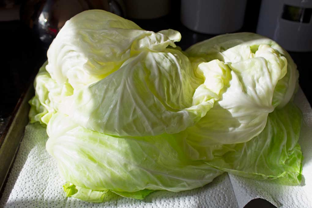 cabbage leaves draining