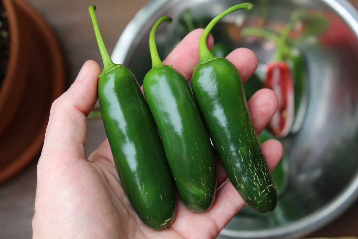 jalapenos in hand
