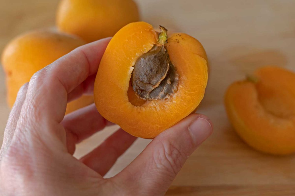 hand holding sliced apricot
