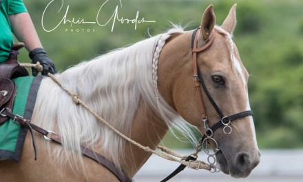 Meadows outrider gives horse a second chance
