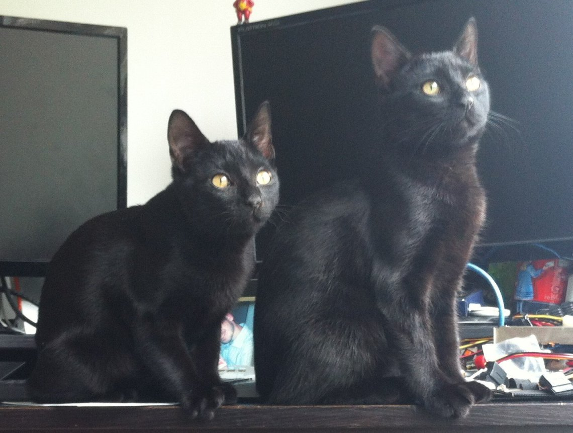 Hades and Zeus - The Kittens