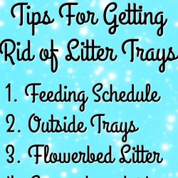 Getting rid of the litter trays