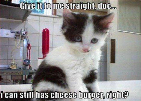 I can still has cheezeburger meme cat neutering advocacy