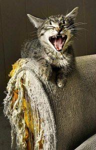 cat scratching armchair