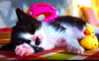 cxat neutering advocacy - cute kitten