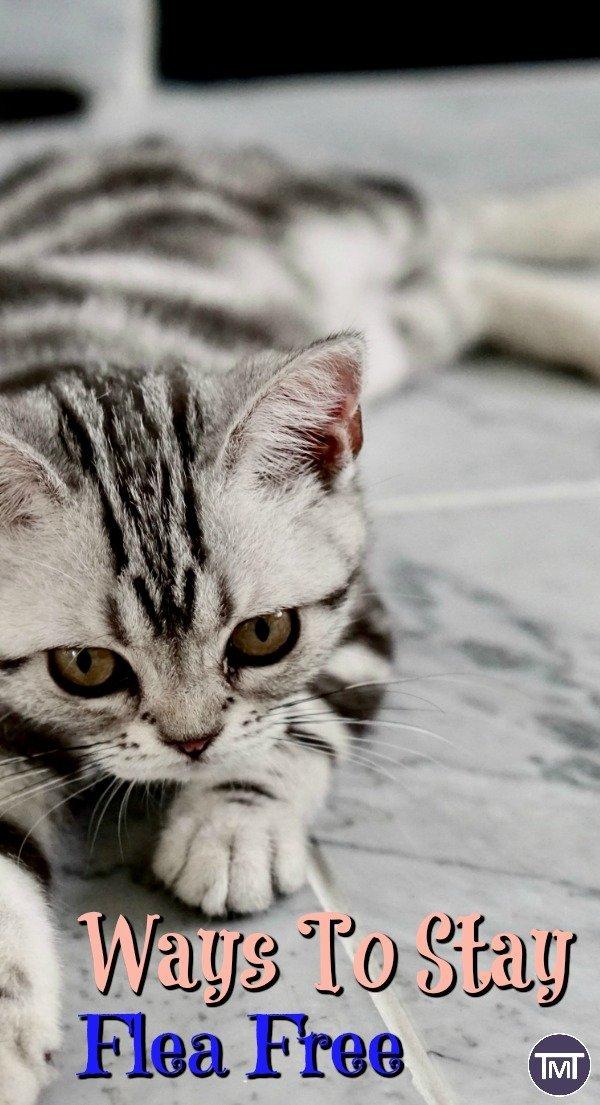 ways to stay flea free. pet care, cat care, cats, fleas, cat lovers