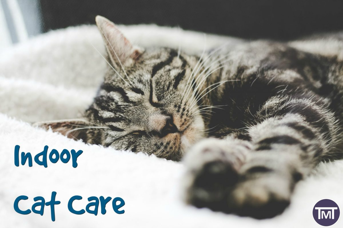 Indoor Cat Care (+ Infographic)