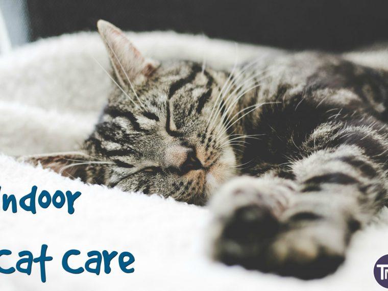 indoor cat care feature image