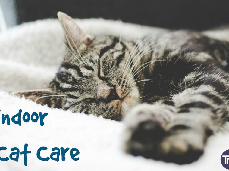 indoor cat care feature image
