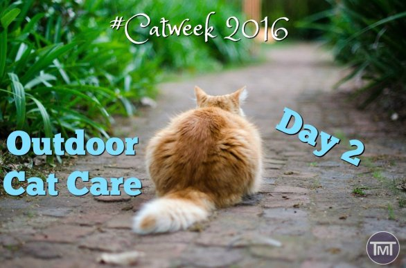 For tips, tricks and advice on outdoor cat care