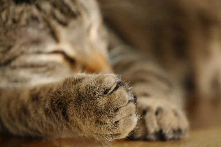 Cat sleeping - Cat claw care tips