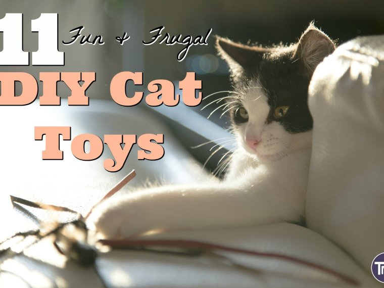 11 fun and frugal DIY cat toys feature image