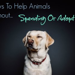 ways to help animals without spending or adopting feature