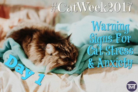 day 1 #catweek2017 feature image Warning signs for cat stress and anxiety