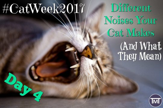 different noises your cat makes and what they mean