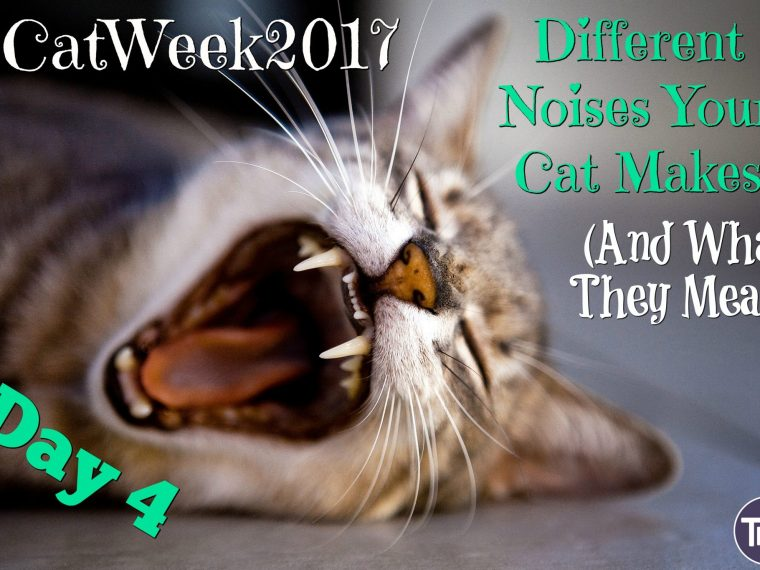 different cat noises and what they mean