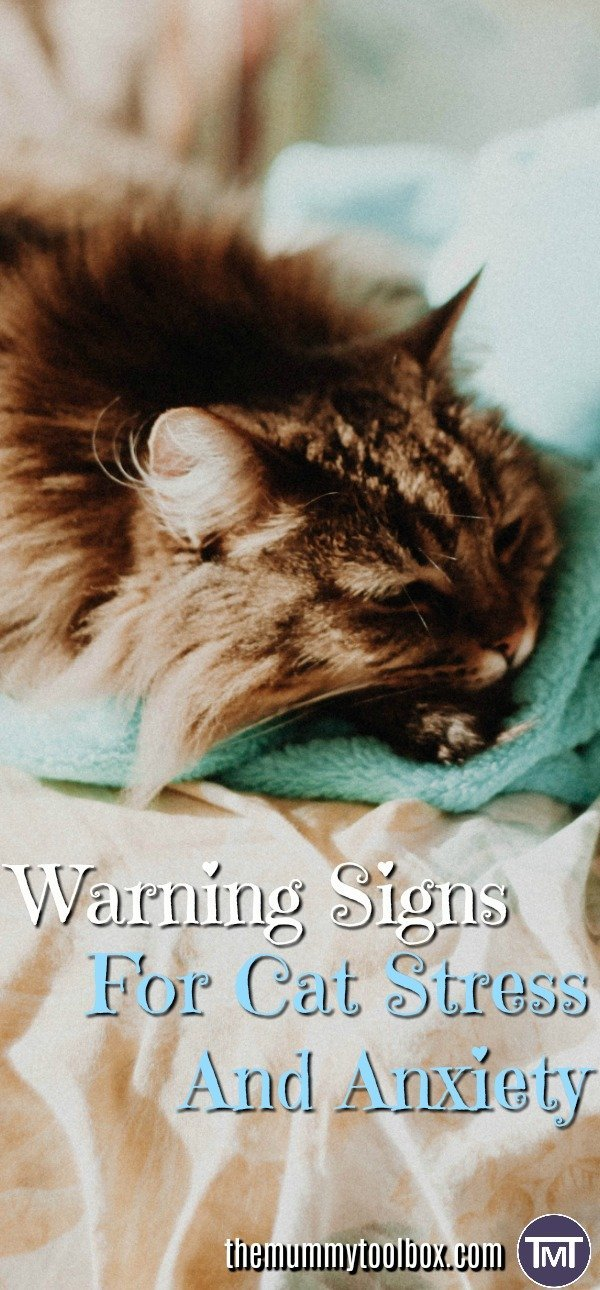 Day 1 of #catweek2017 has started and we are looking at the signs for cat stress and anxiety, the causes and what to do to offer some relief.