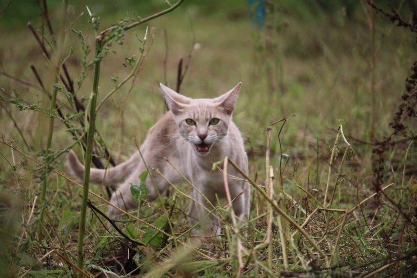 cat growling cat noises image