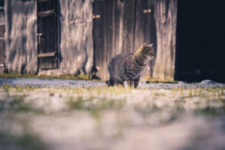 outdoor cat in field. the great cat debate