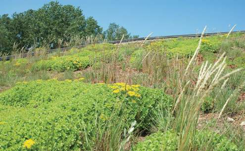 Ramsey-Washington Metro Watershed District went with a vegetated roof that used native plants and sedums. (Photo provided by RWMWD)