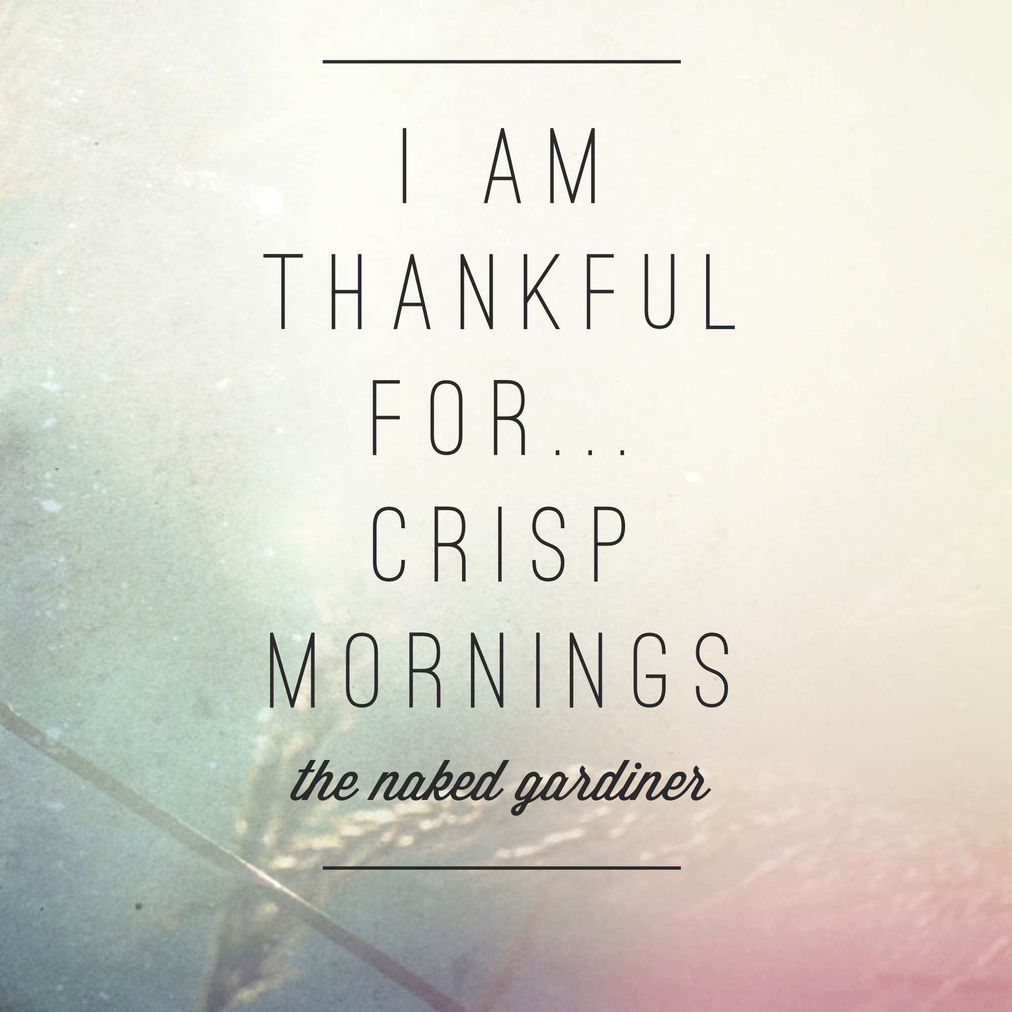 thanful-thursdays-crisp-mornings