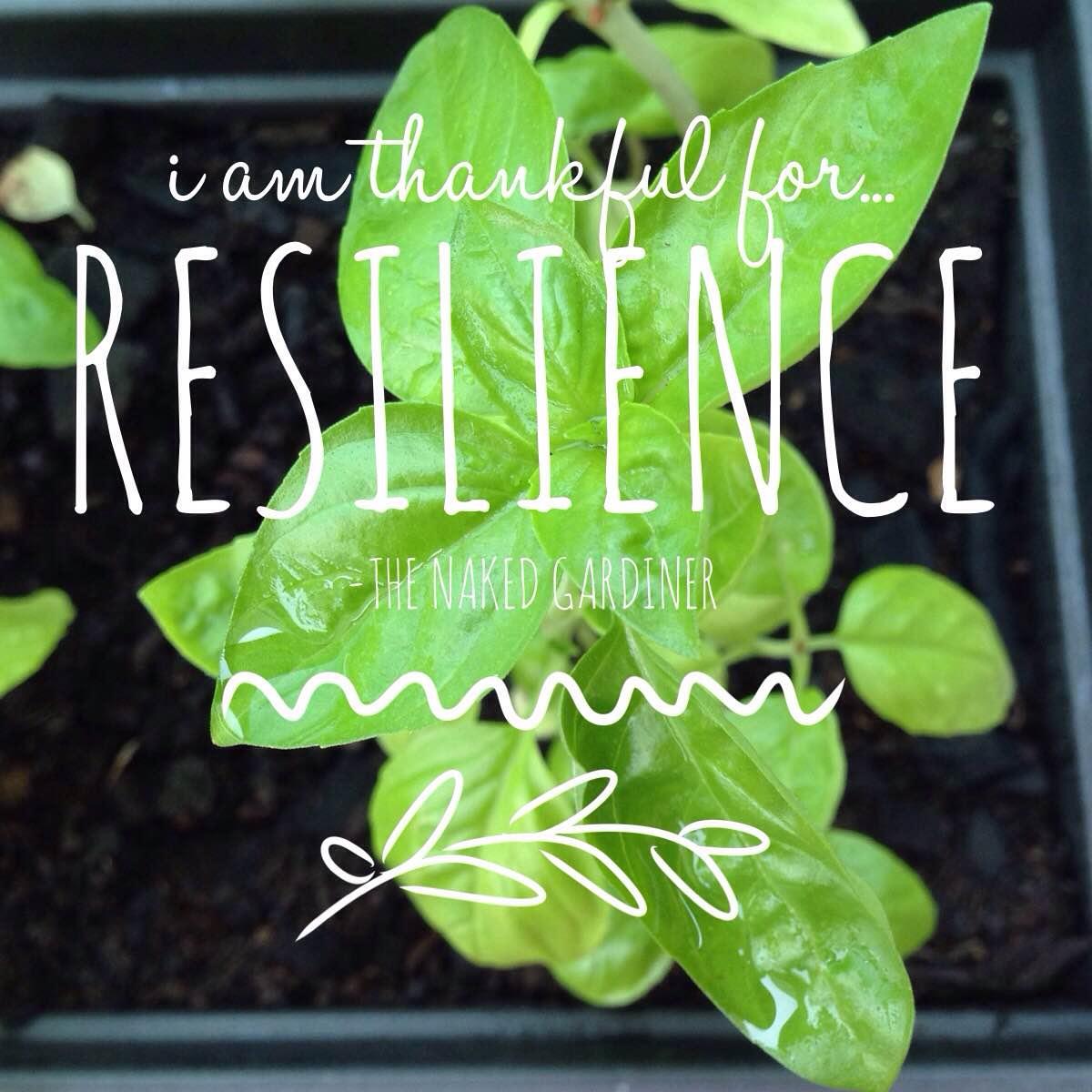 thankful-thursday-resilience-the-naked-gardiner