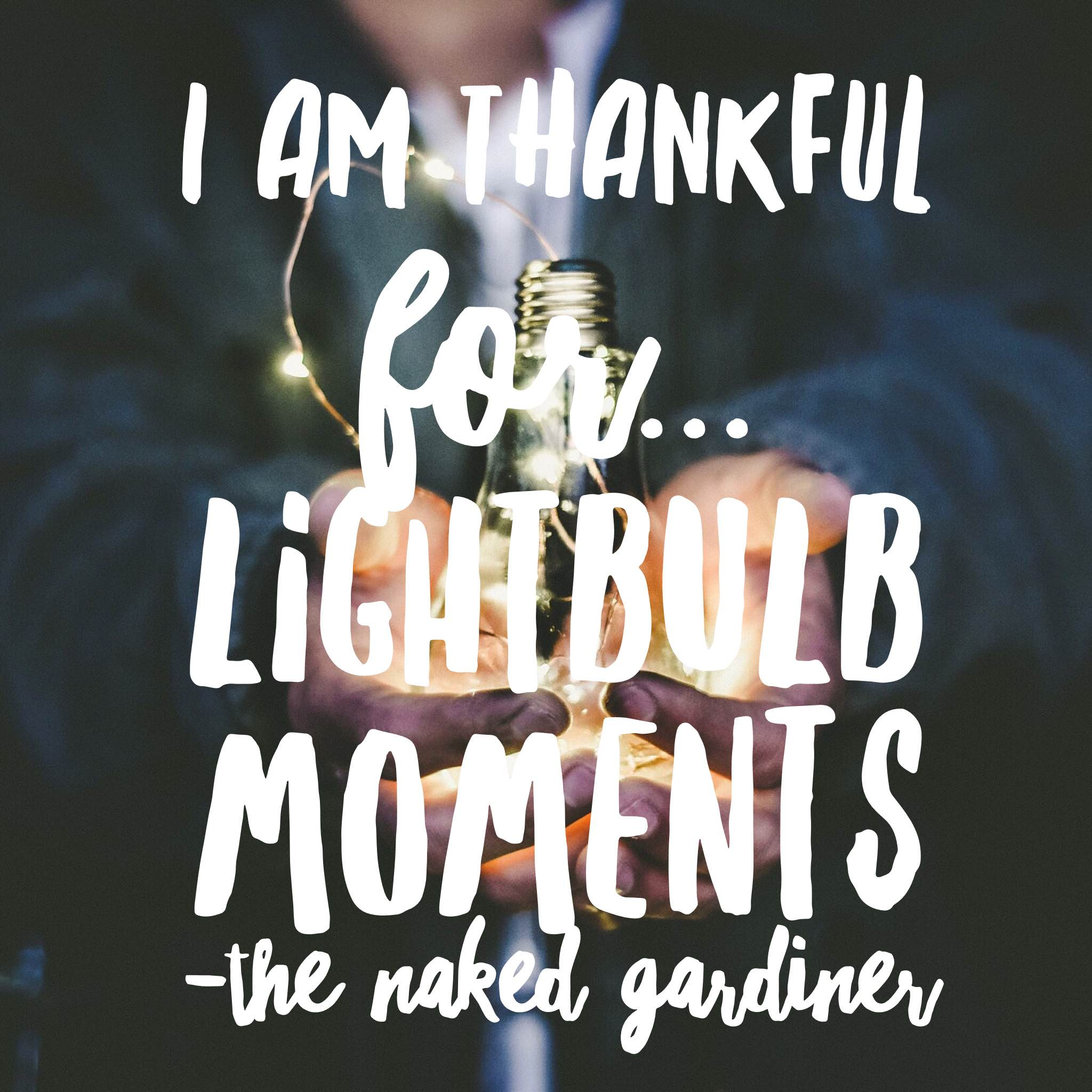 thankful-thursdays-lightbulb-moments-the-naked-gardiner-kathy-gardiner