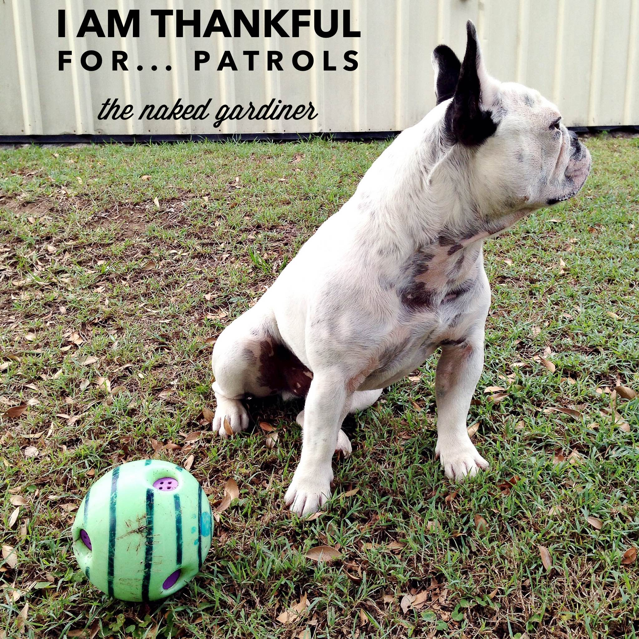 thankful-thursdays-patrols-thenakedgardiner