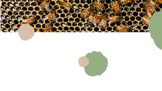 10 Health Benefits of Manuka Honey