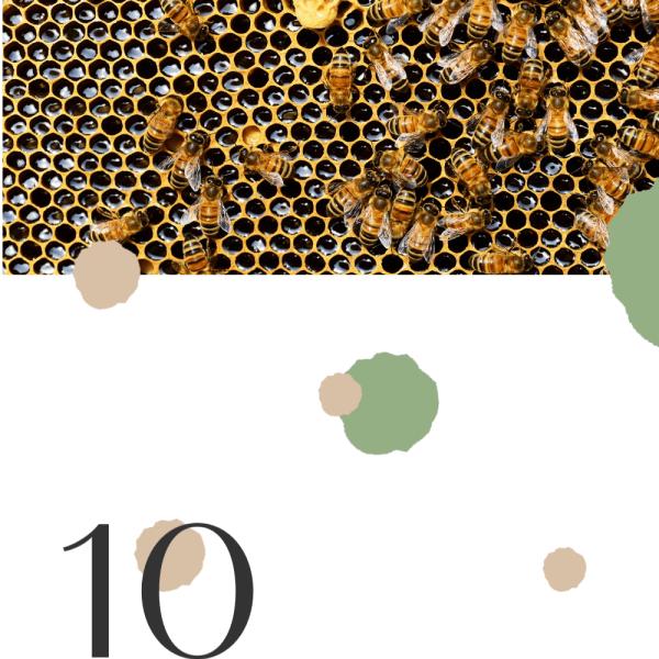 10 Proven Health Benefits of Manuka Honey