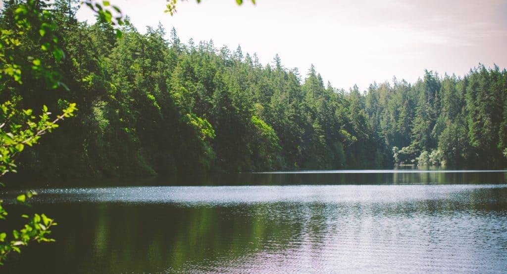 beautiful lake with trees